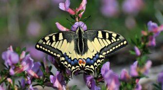 macaone casa delle farfalle