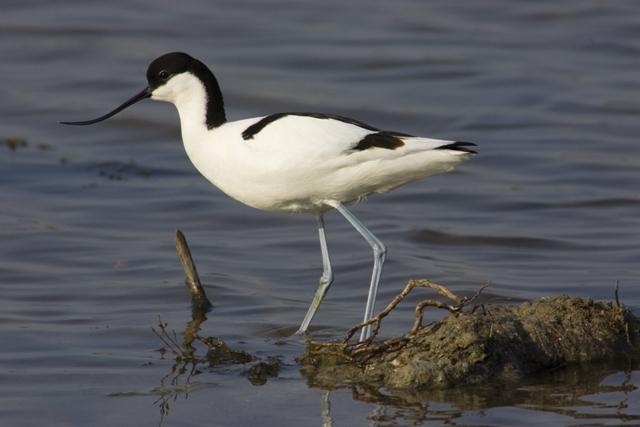 Sulla rotta degli uccelli migratori